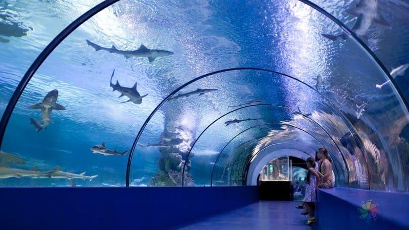 Antalya Aquarium Fear Trophy Antalya gezilecek yerler